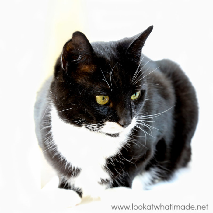 Black and White Cat